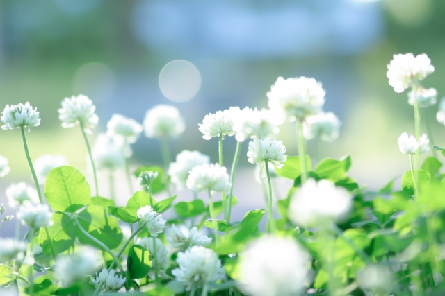 花がたくさん咲いている
