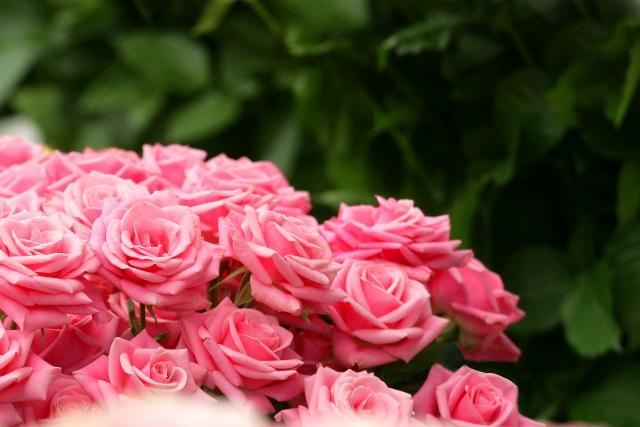 花の香りがする花屋