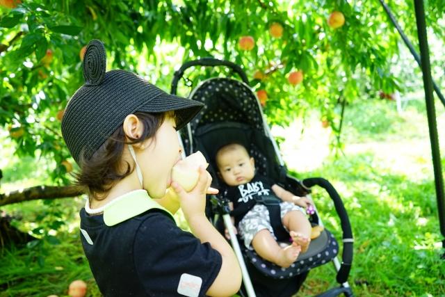 桃を食べる