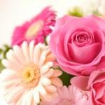 バラの花を見る