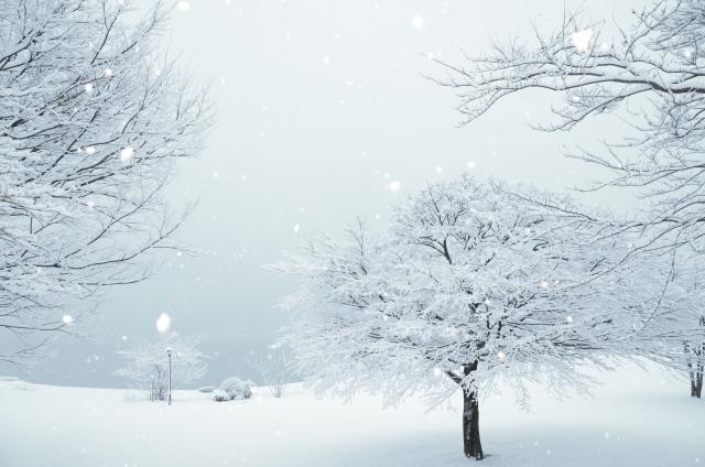 粉雪が降る