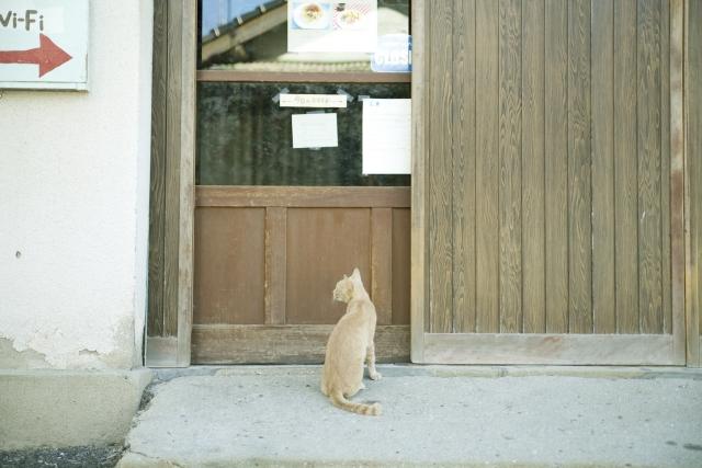 猫が家に忍び込んでくる