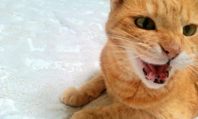 猫に襲われる