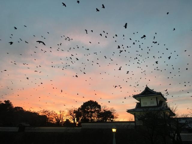 複数のカラスが空を飛ぶ