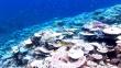 サンゴと青い海、地球を守る新垣結衣のナレーションCM雪肌精!