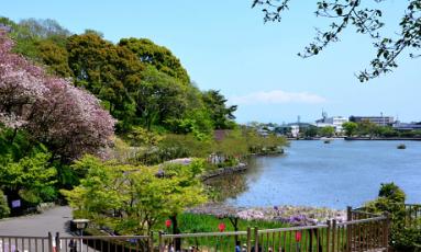 蓮華寺池公園2021ホタル観賞情報!見頃の時期と時間や駐車場も