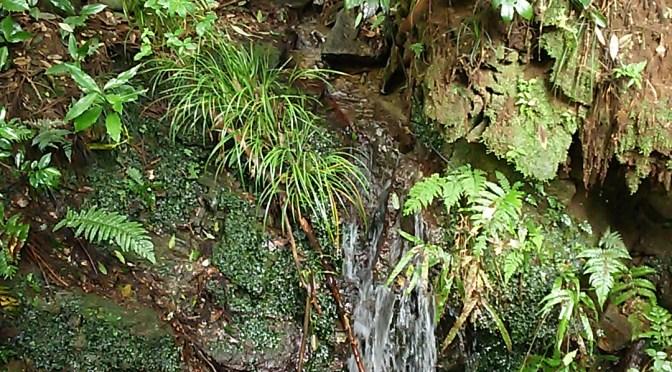 仙元山にも水が流れるようになりました