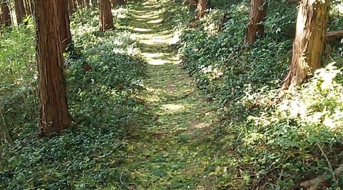 仙元山の保全・緑のジュータン