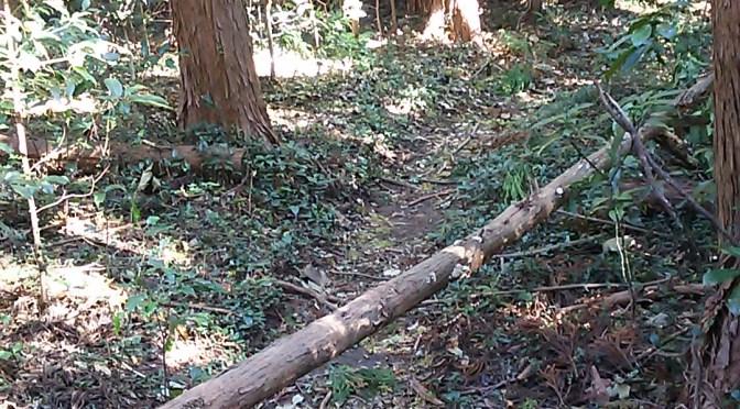 今日も倒木処理