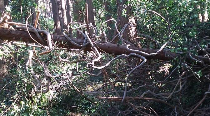 太いツルに絡まれた倒木