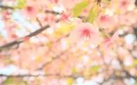 【潜在意識:セミナー体験談】これからももっと学びたい、成長したい、幸せになりたいです!