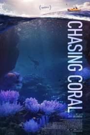 ไล่ล่าหาปะการัง Chasing Coral (2017)