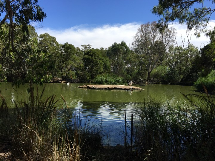 the waterbody that attracts many birds