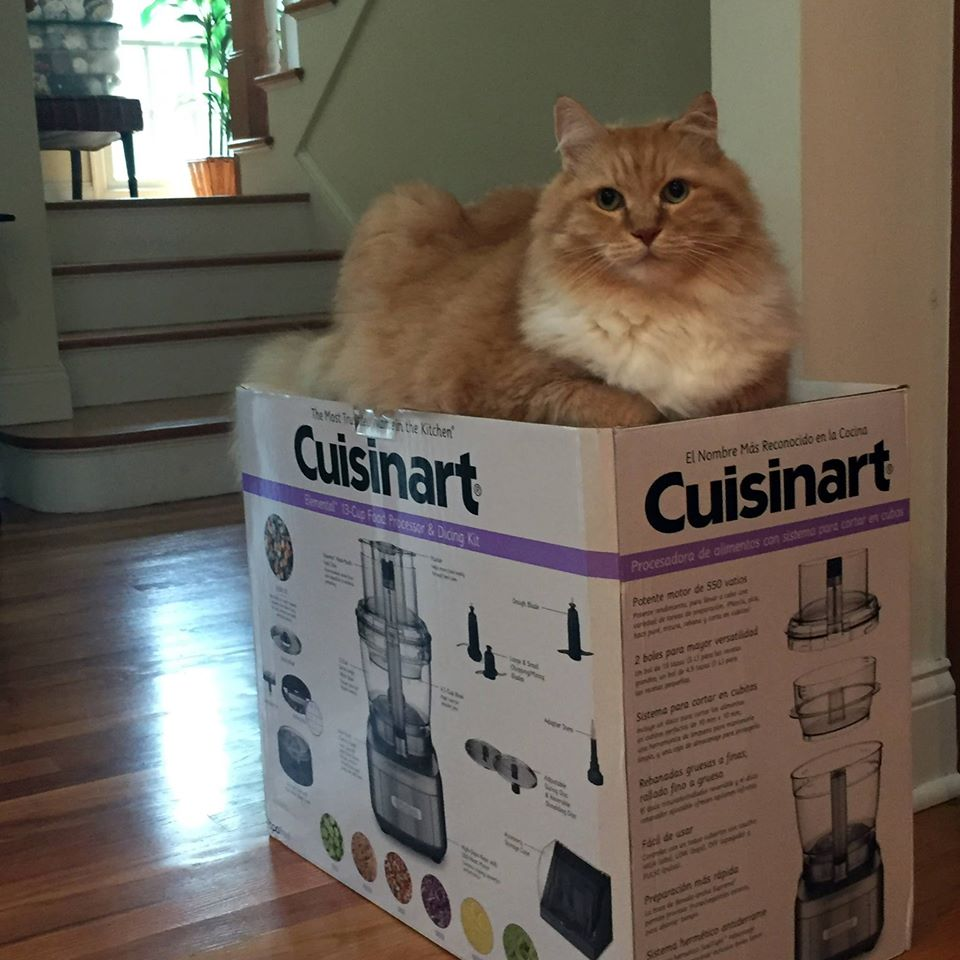 cuisinart-rice-cooker-giveaway