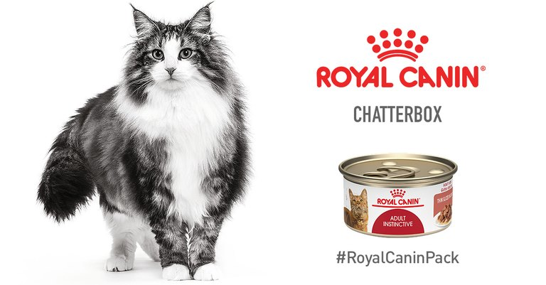 ROYAL CANIN Cat Food Chatterbox
