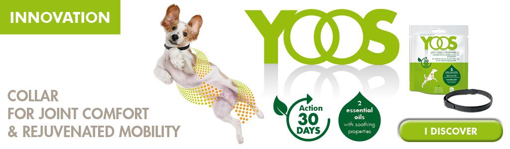 FREE YOOS Essential Oil Dog Collar