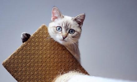 Free EZ Cat Pads Sample