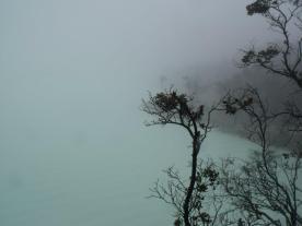 Lihat pohonnya, kabutnya... amazing
