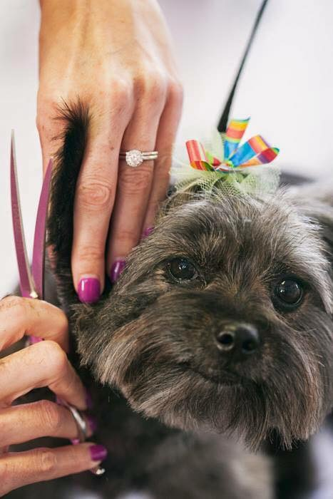 Pet Grooming Amp Spa Services