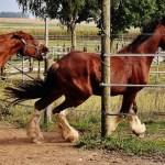種牡馬の特徴と成る為の条件は?年間にどのくらいヤッているのか?