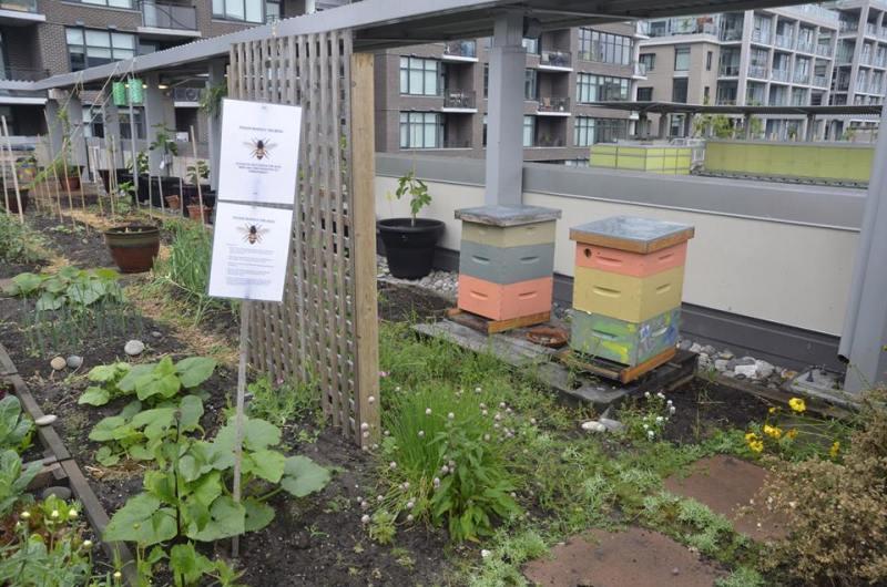 AV Co-op Bee Hives