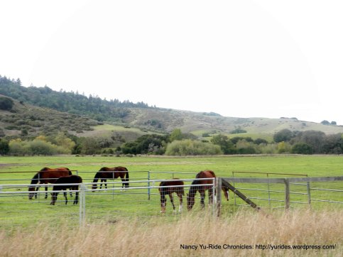 Nicasio horse ranch