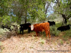 cows on the side of the road
