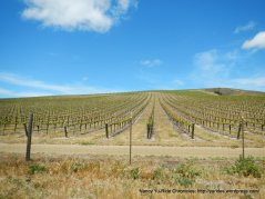 vineyards on Cat Canyon Rd