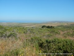 open grasslands