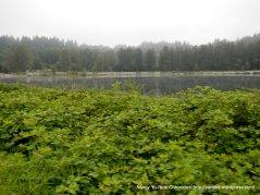 Snohomish pond