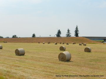 rolled hayy bales