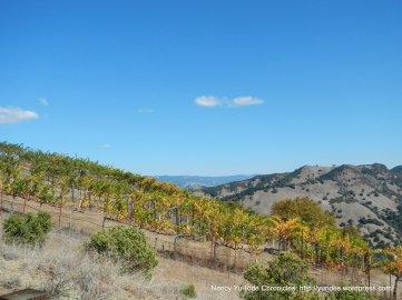 steep mountain vineyards