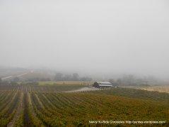 dense fog over the valley