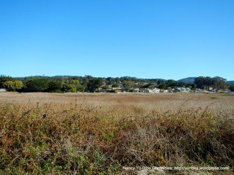 Carmel River State Beach marshlands