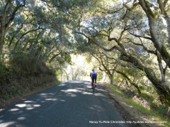 Robinson Canyon Rd-under canopy of trees