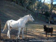 horse-donkey