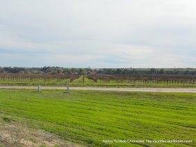 Estrella vineyards