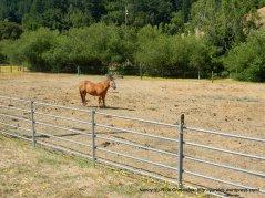 horse rancheshorse ranches