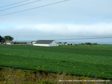 coastal agricultural fields