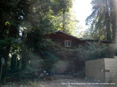 home nesteld in the woods