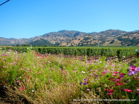 wildflowers/vineyards