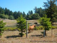 seaview rd ranch