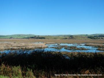 tomales bay wetlands