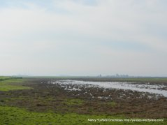 grizzly island wetlands