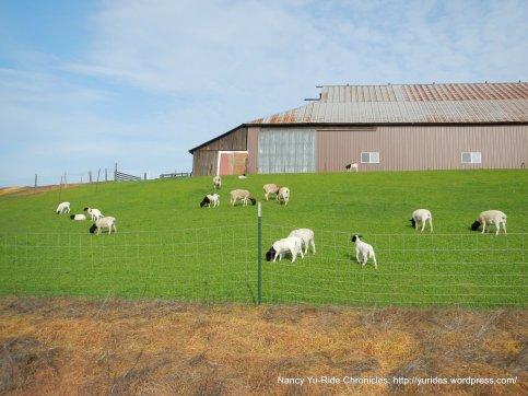 anderson rd ranch