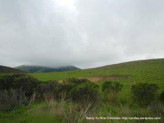 nicasio valley hills