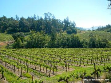 hillside vineyards