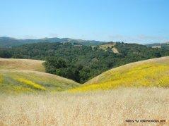 mustard slopes