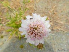 white/pink wildflowers