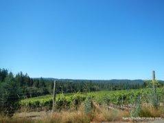 annapolis rd vineyards